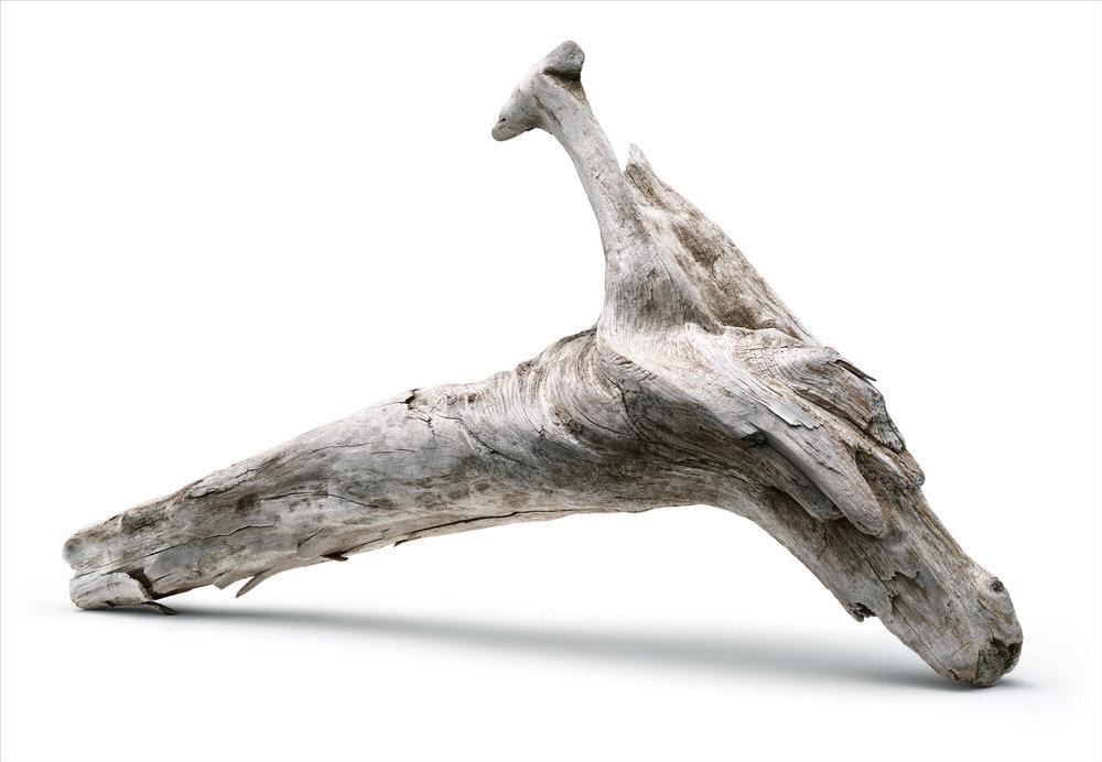 Driftwood V