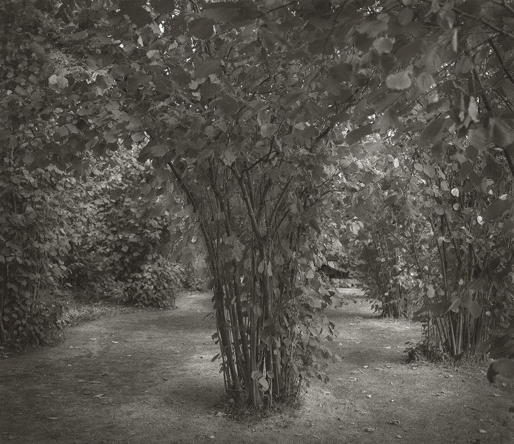 Nuttery Sissinghurst