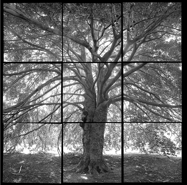 Sean Kernan -  Beech Tree, New Haven