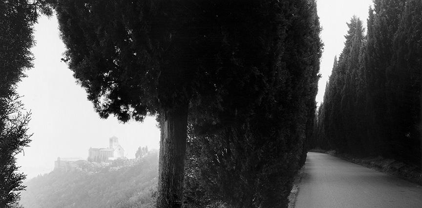 Sean Kernan -  Cypresses, Assisi