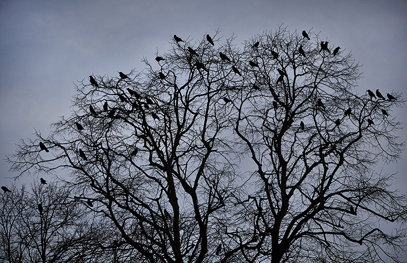 Sean Kernan -  Crows, Istanbul
