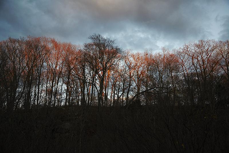 Sean Kernan -  Evening Light in Trees