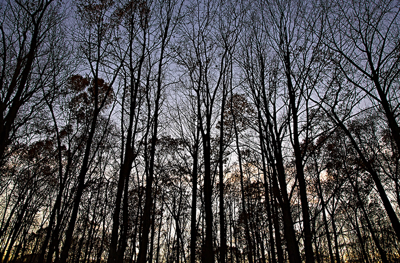 Sean Kernan -  Winter Trees