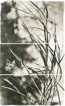 Valley Grasses II