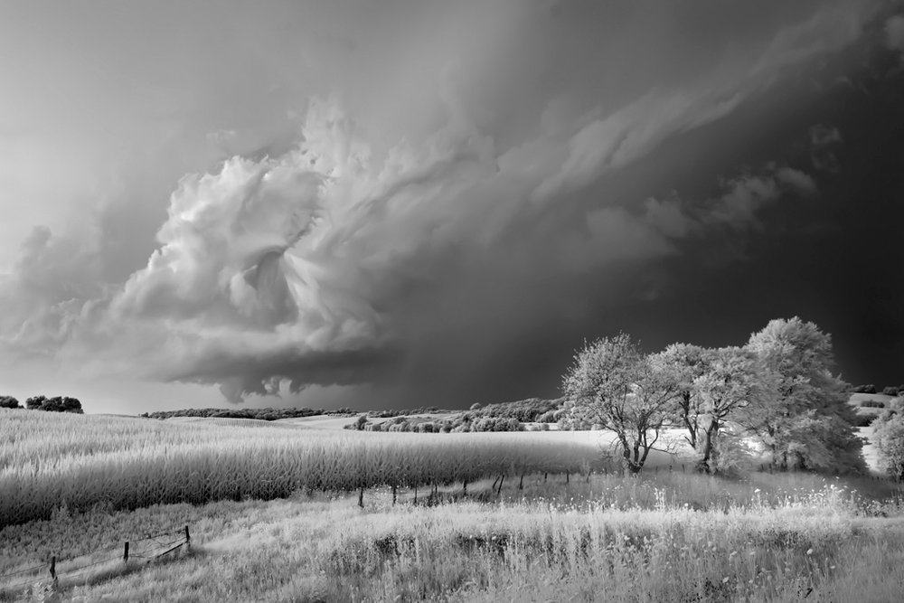 Storm, Field, and Trees