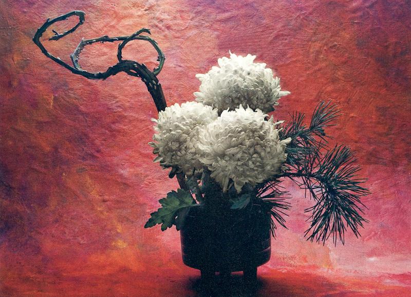 Japanese Crysanthemum