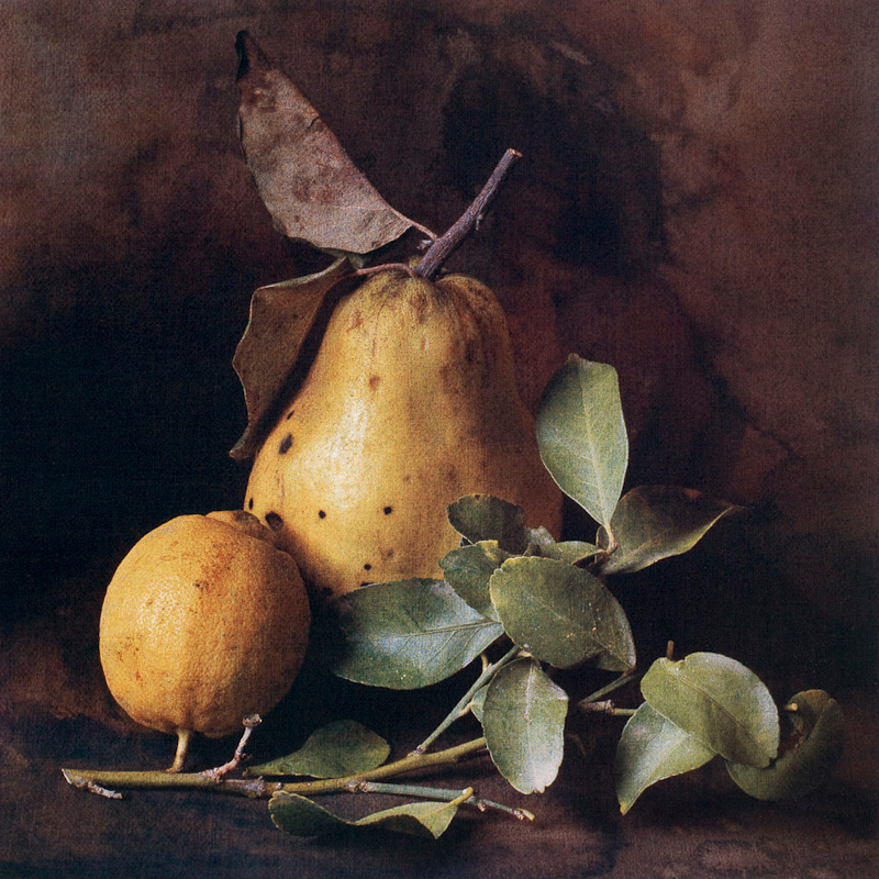 Autumn Quince and Lemon II