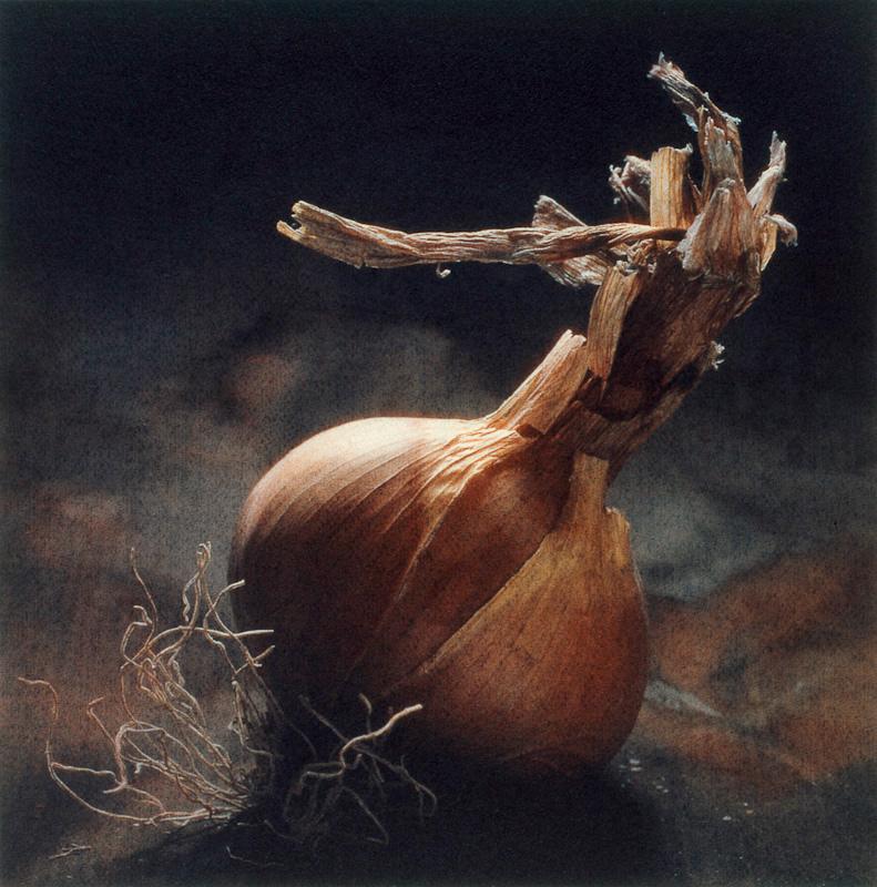 Summer Onion II