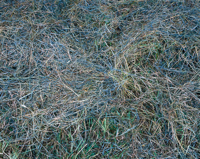 Canoe Meadows Blue Grasses