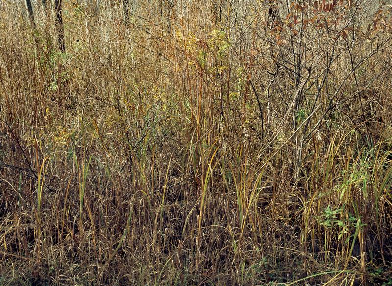 Canoe Meadows Field