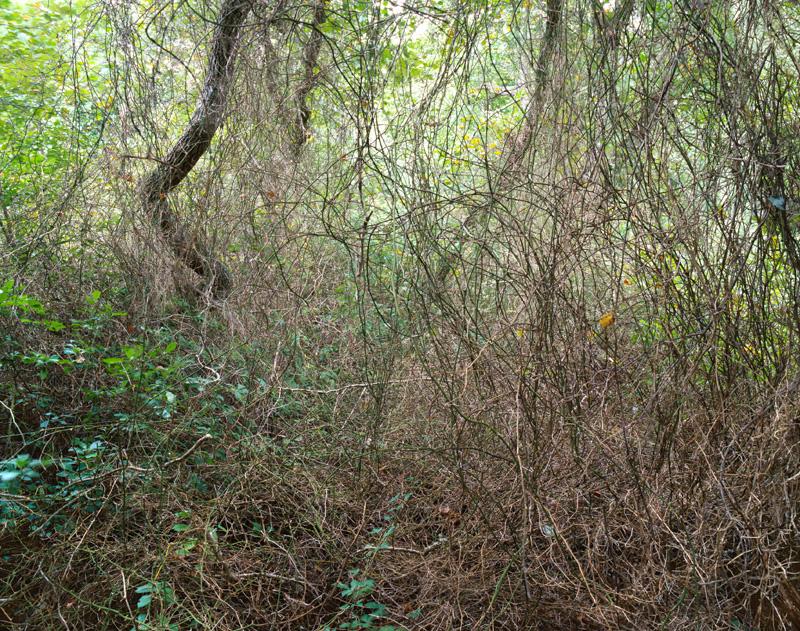 Cape Branches