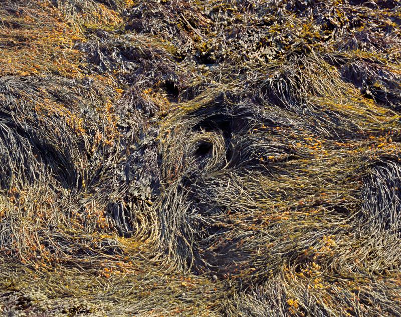 Newport Seaweed 2005