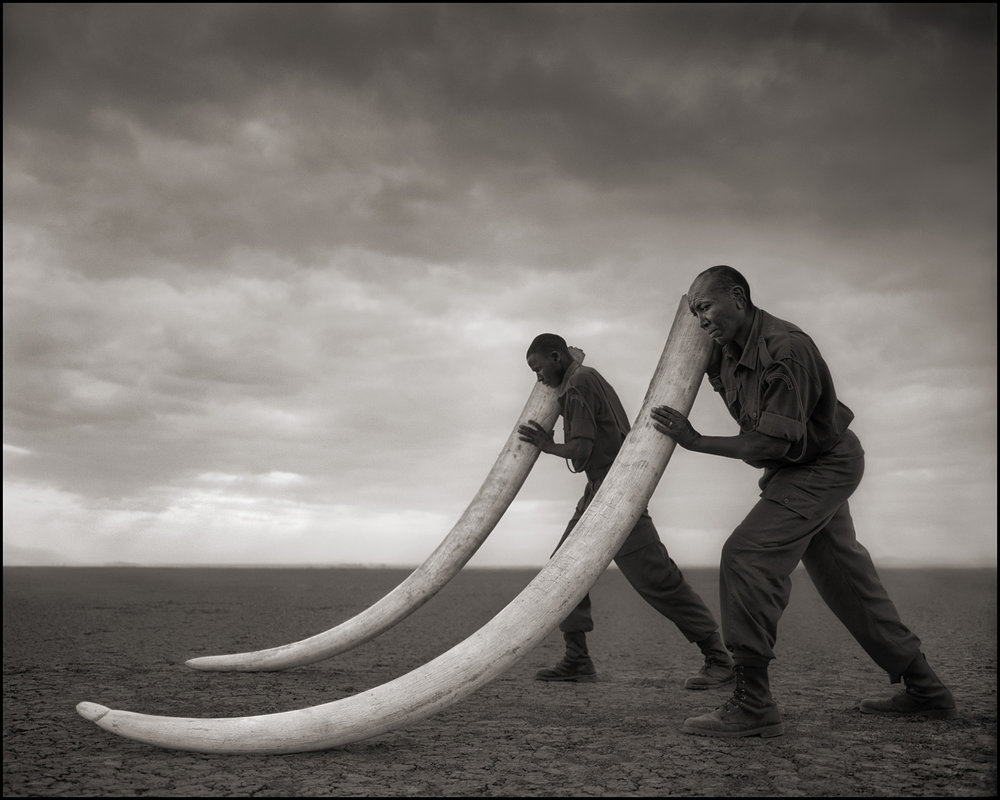 Two Rangers with Tusks of Killed Elephant