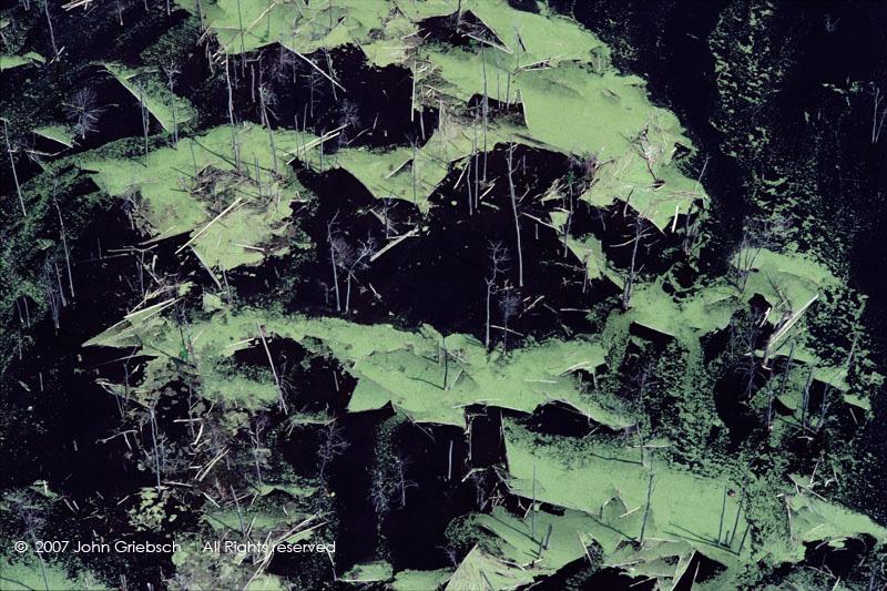 Swamp with Duckweed, Alabama, NY