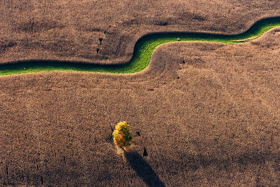 Autumn Corn Field, Tree and Green Watercourse near Joy, NY
