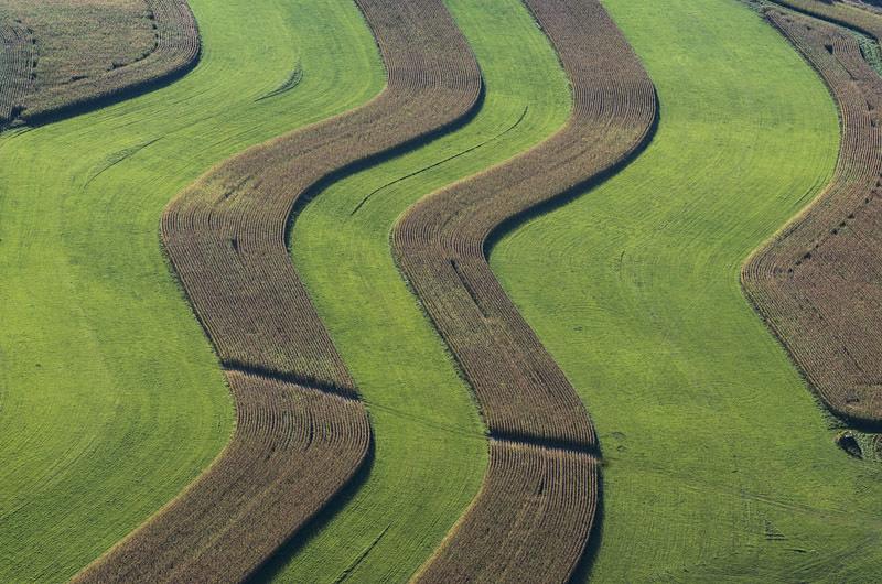 Wavy Crop Stripes near Marion, NY