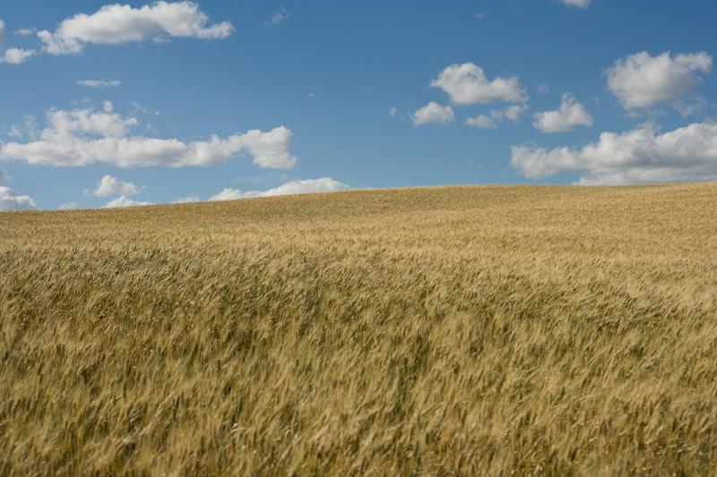 Harvest (21), September 2005