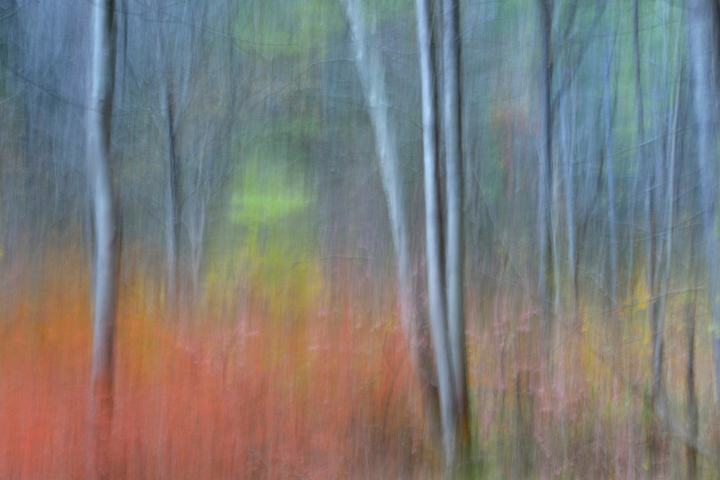 Forest Series #1