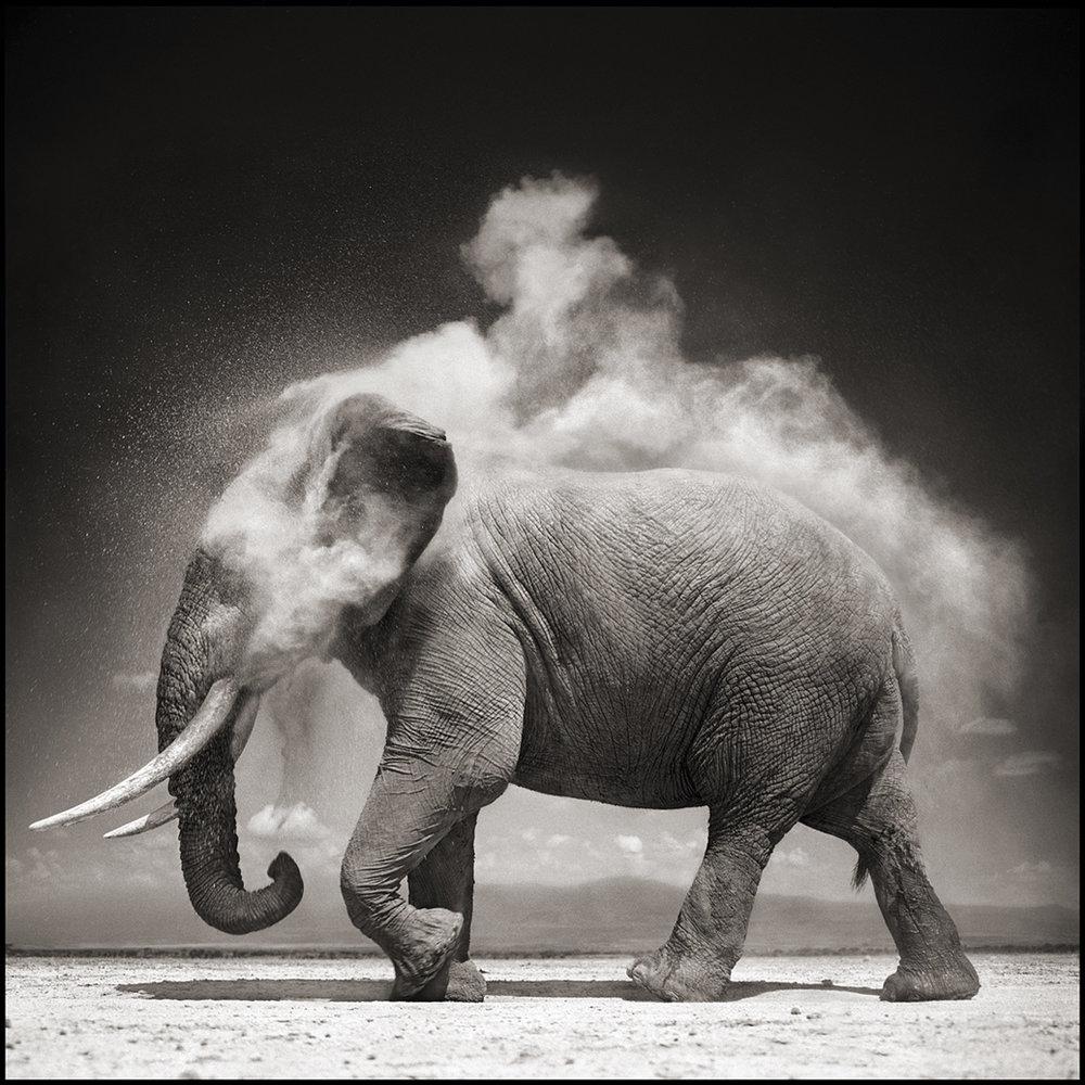 Elephant with Exploding Dust