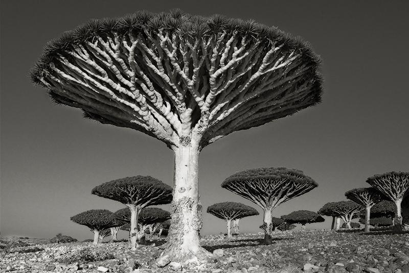 Diksom Forest.jpg