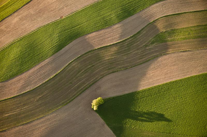 Field Corner Tree 6416.jpg