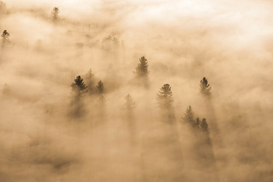 Conifers in Morning Fog near Saranac Lake, NY 2012.jpg