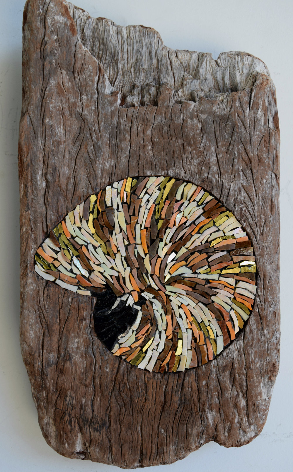 Nautilus in Driftwood