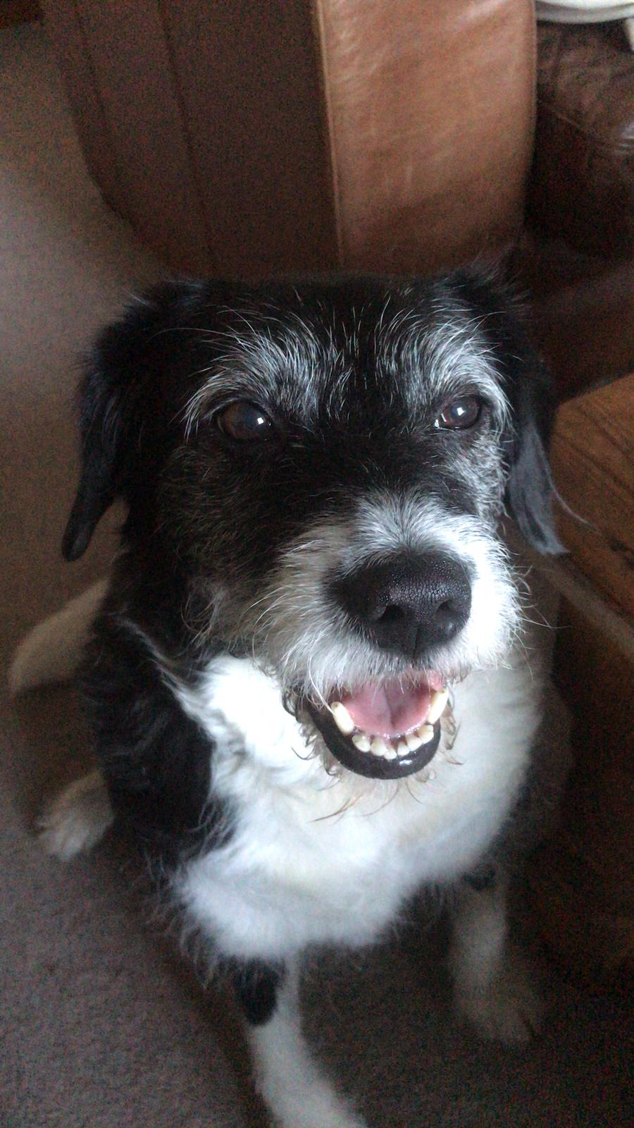 The Benefits of Pet Therapy - By Rachel Mackay