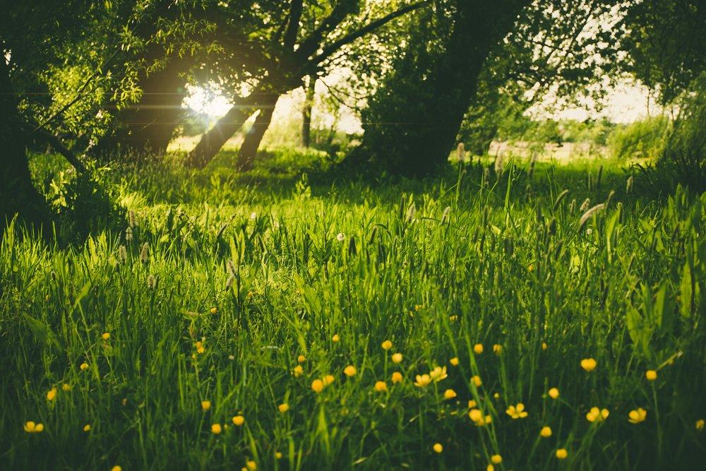 bloom-blossom-field-109260.jpg