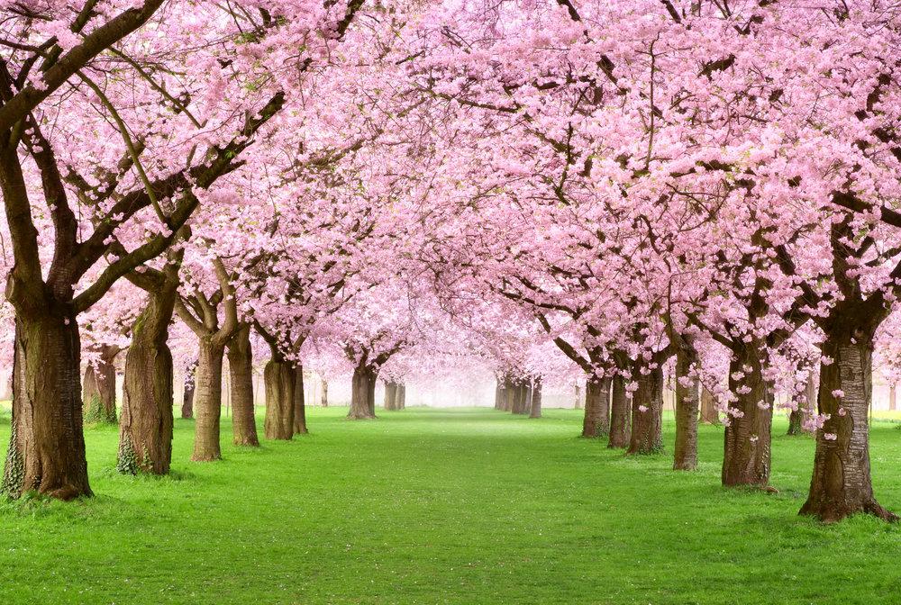 flowering trees 2.jpeg