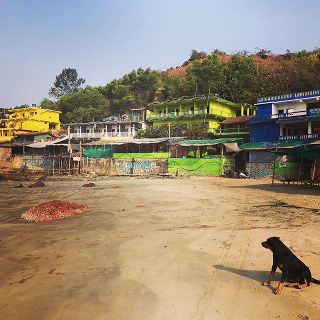A place of colour and experiences... #arambolbeach #goa #vibrantcolours #barefootsoultraveller #barefootsoultravellerretreats #connect #goodvibes #photobombingdoggo #hesagoodboi