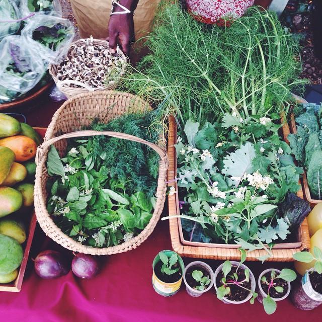 Ujima Natural Farmers Market - Providing natural and organic produce to Kingston