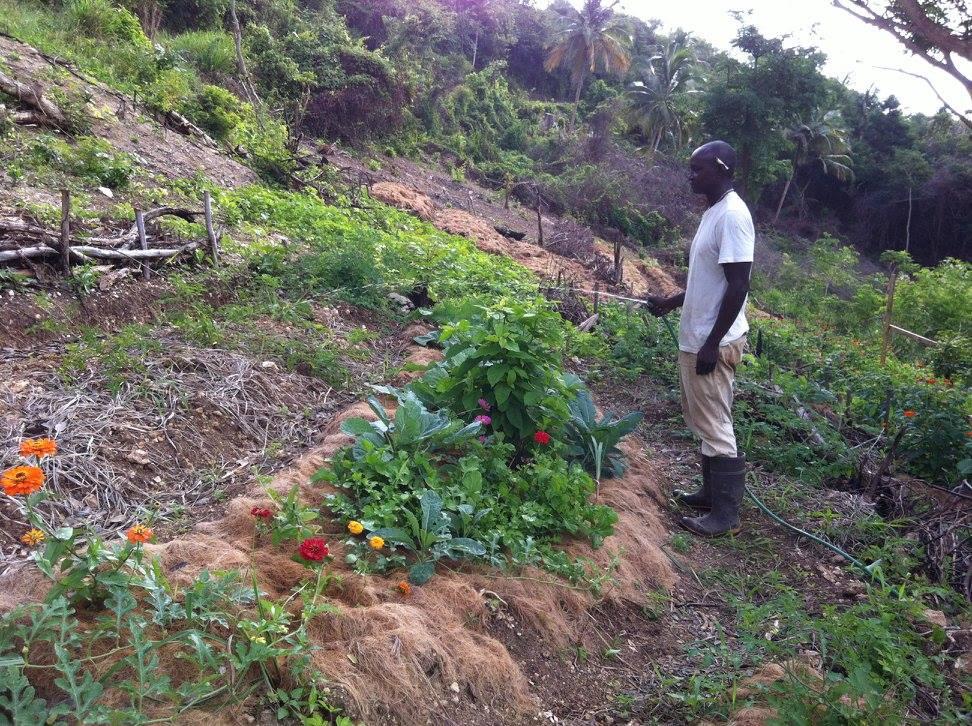 Jamaica Sustainable Farm Enterprise Program - Some more info