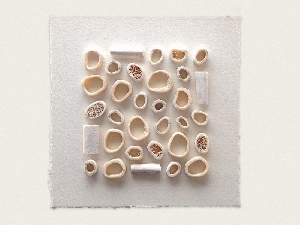 'Bone II'  Kangaroo bone stitched to paper - 20cm x 20cm