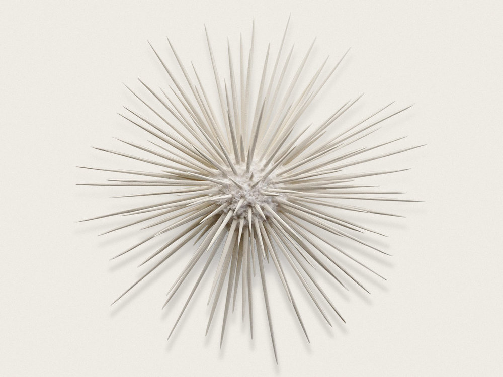 'Urchin II'  Sculpted and handmade paper - approx 38cm x 38cm x 7cm
