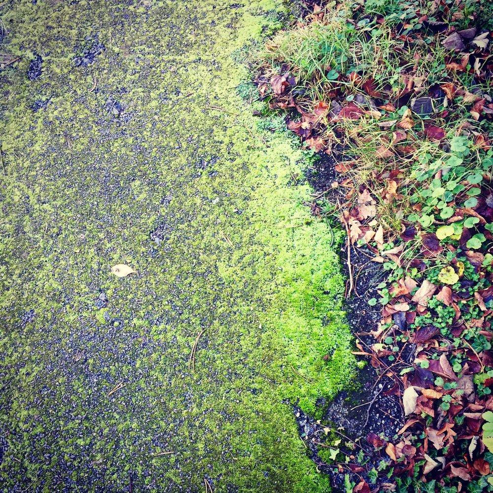 Mossy Path 1