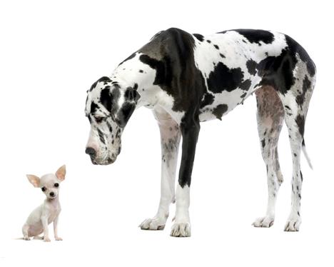 chihuahua-and-big-dog.jpg