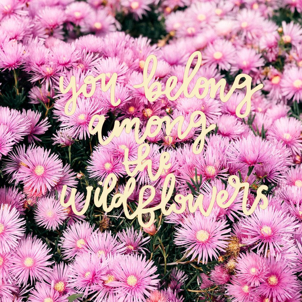 Photo-Wildflowers.jpg