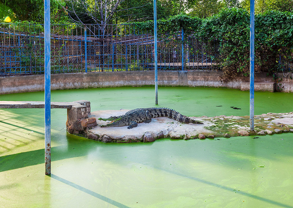 Crocodile enclosure