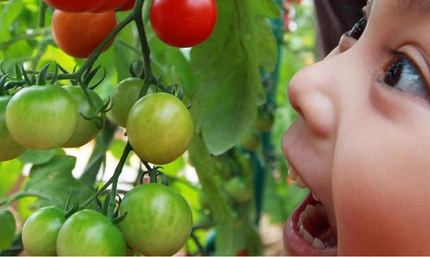 SCMP: Nutrition: children eating greens