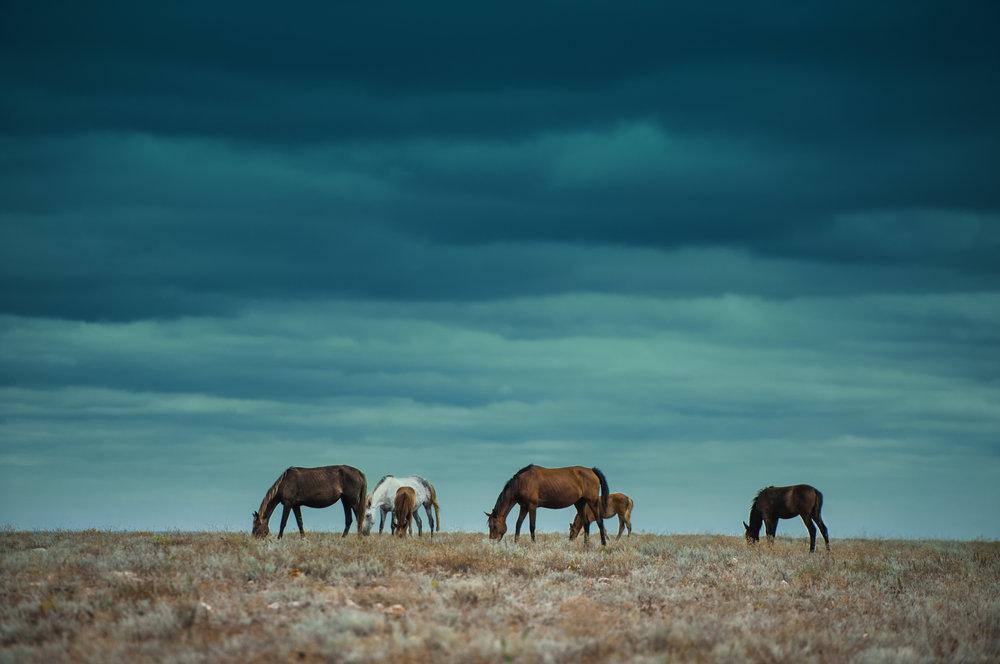 Trenne dich nie von Deinem Pferd ohne Versöhnung - E.F. Seidler