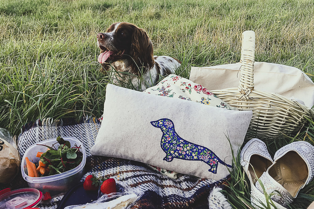 A summer picnic with blankets, cushions and strawberries. A basket of food and a spaniel!