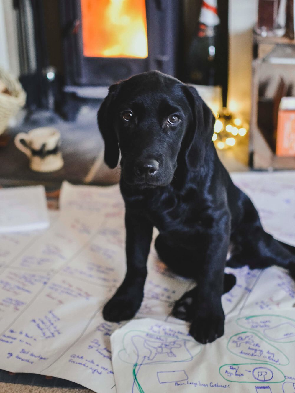 Black Labrador puppy sat by a log burner