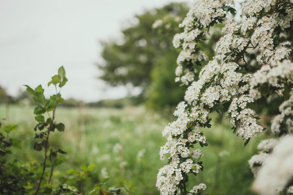 Spring hawthorn blossom looking out across a field - Journal prompts for creatives