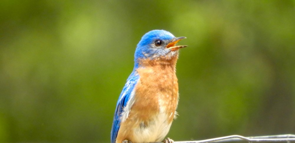 Texas master naturalist - HAYS COUNTY CHAPTER