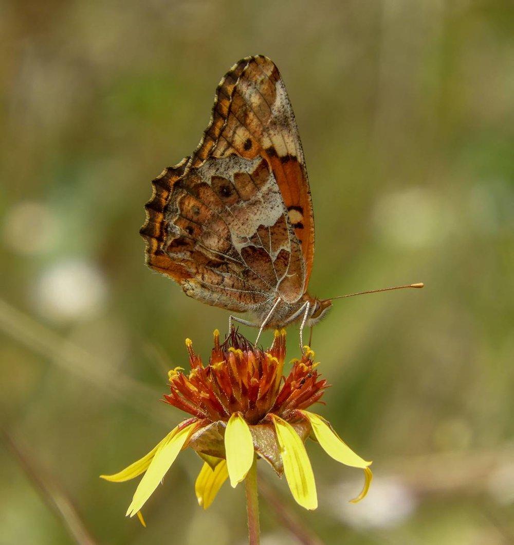 Hays County Master Naturalist