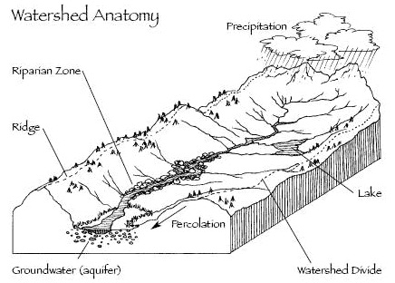 Watershed Anotomy - good Illustration.jpg