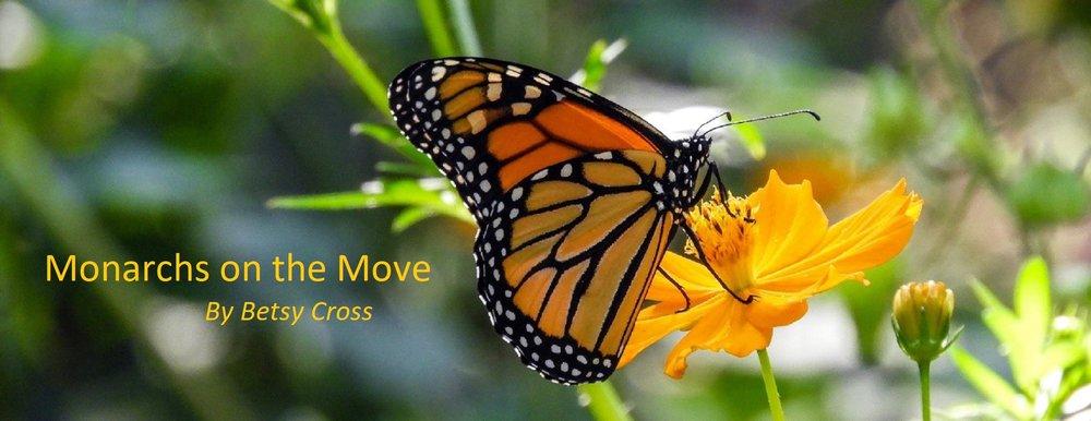 First Fall Monarch - Zilker Park - September 26, 2018