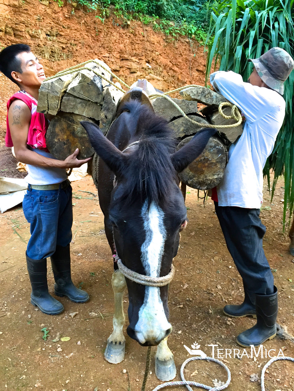 Ladisloa and his son packing up their new horse for the day's work.