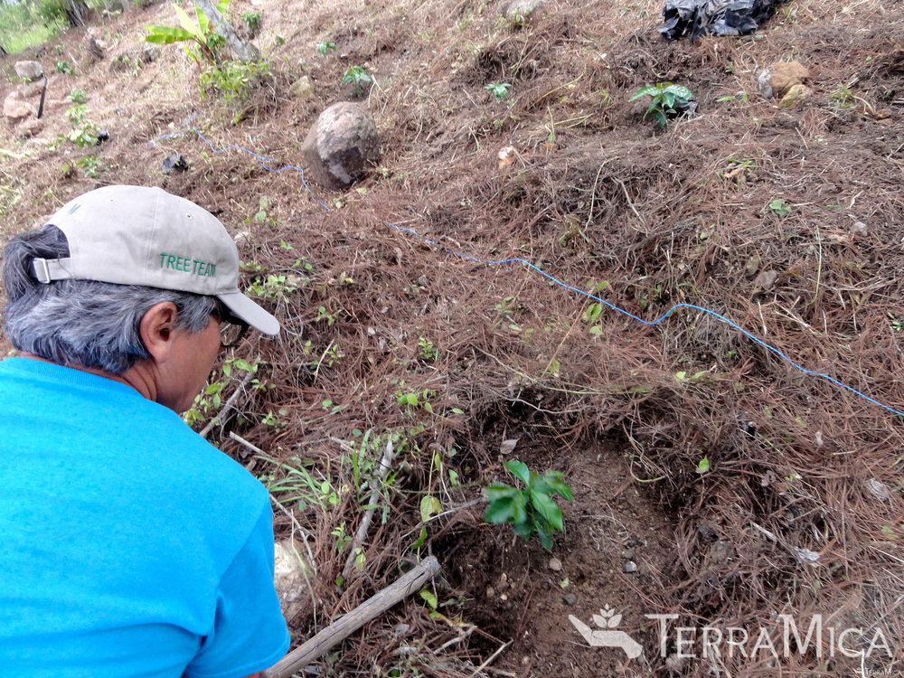 volunteer-planting-coffee-trees-casa-hogar-jun-2016-stevedixon.jpg